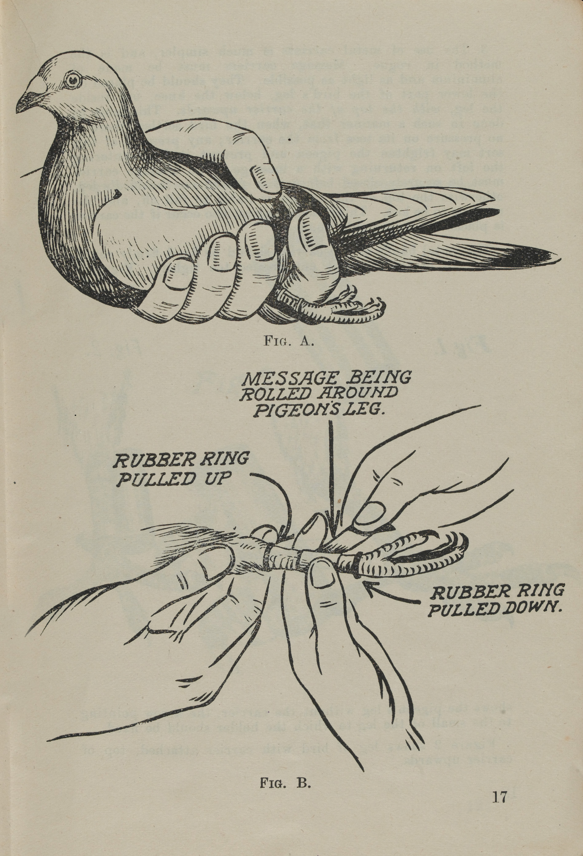 This page from 'Carrier Pigeons in War' shows how to tie a message around a bird's leg.