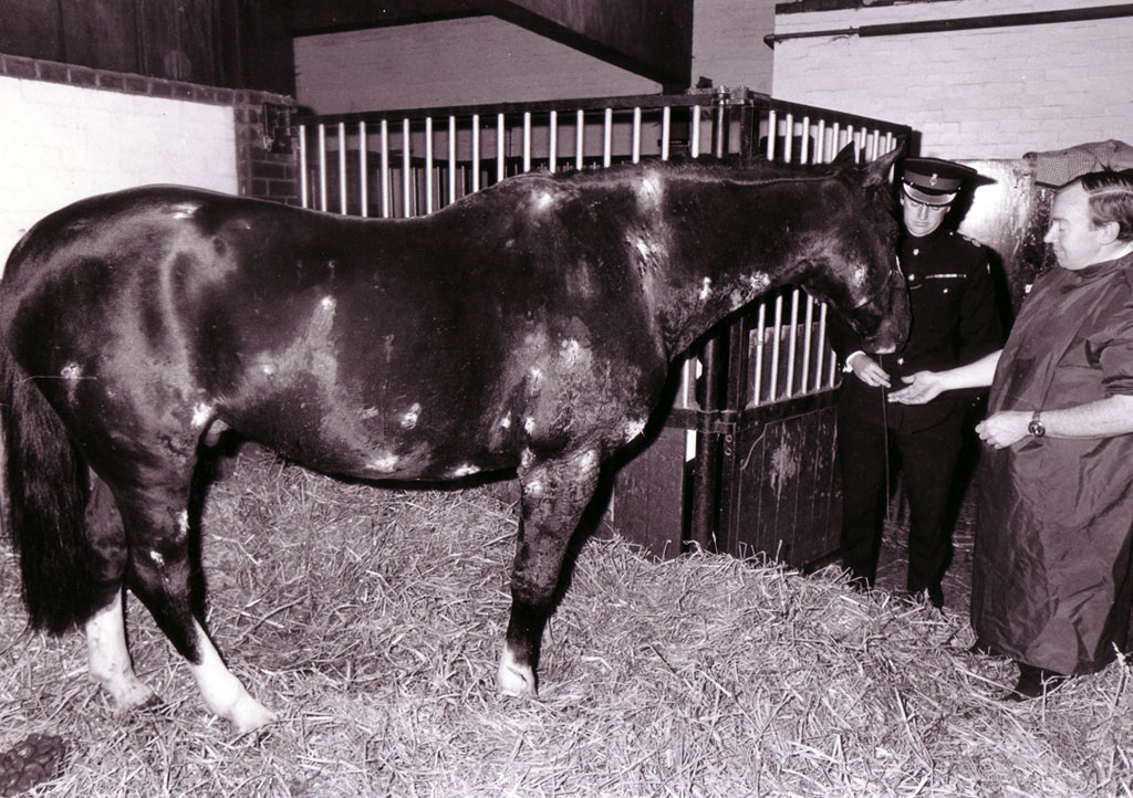 Sefton recovering from his wounds ©Household Cavalry Museum