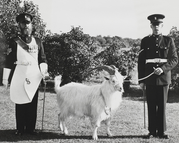 A regimental goat mascot of the Royal Welsh Fusiliers, with his Goat Major and farrier, 1950