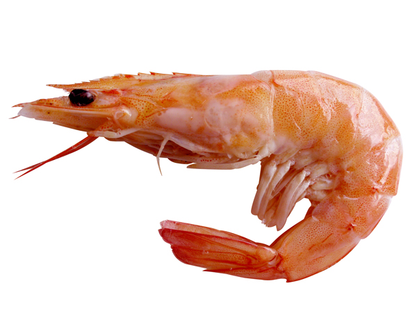 Chitosan is made from the shells of prawns and shrimps