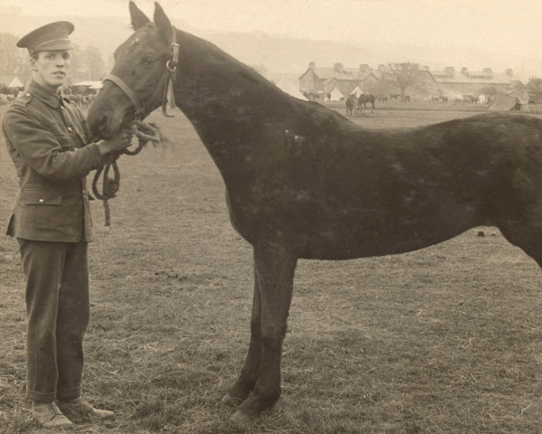 Inspecting a cavalry remount, 1914