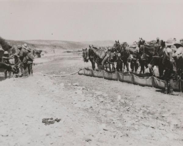 Royal Buckinghamshire Hussars watering their horses, 1915