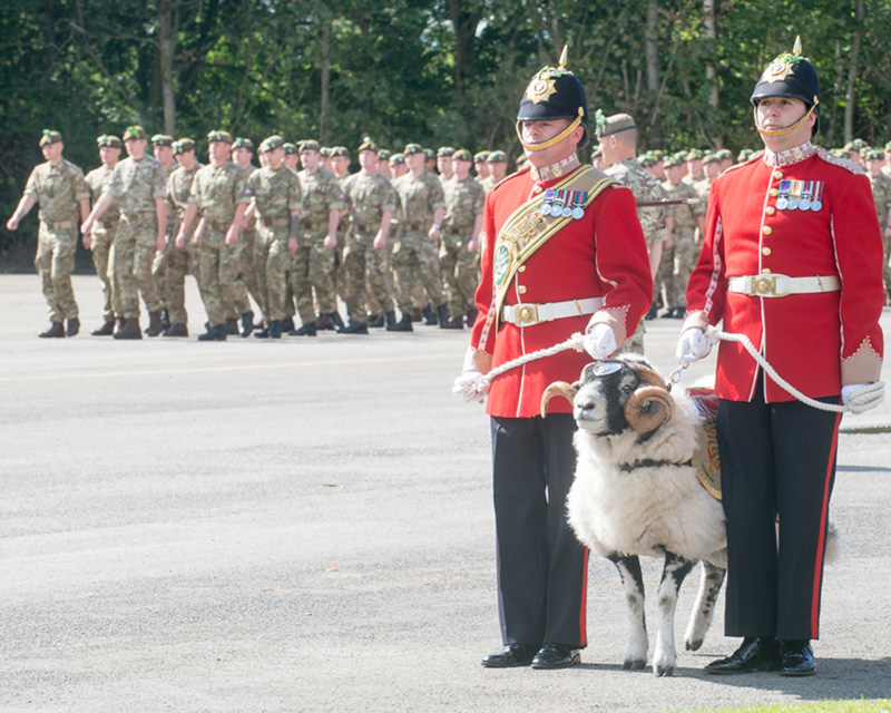 2nd Battalion The Mercian Regiment and their ram mascot celebrate Formation Day at Dale Barracks, Chester, 2015. The regiment was established in 2007 by the amalgamation of three existing regiments.