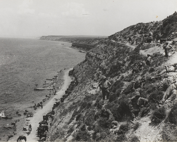 Horses picketed on the beach between Cape Helles and Gully Ravine, 1915