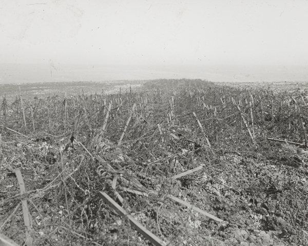 Wire entanglements of the Hindenburg Line near Heninel, May 1917