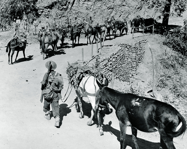 Mule transport on the Ngakyedauk Pass road during the Battle of the Admin Box, February 1944