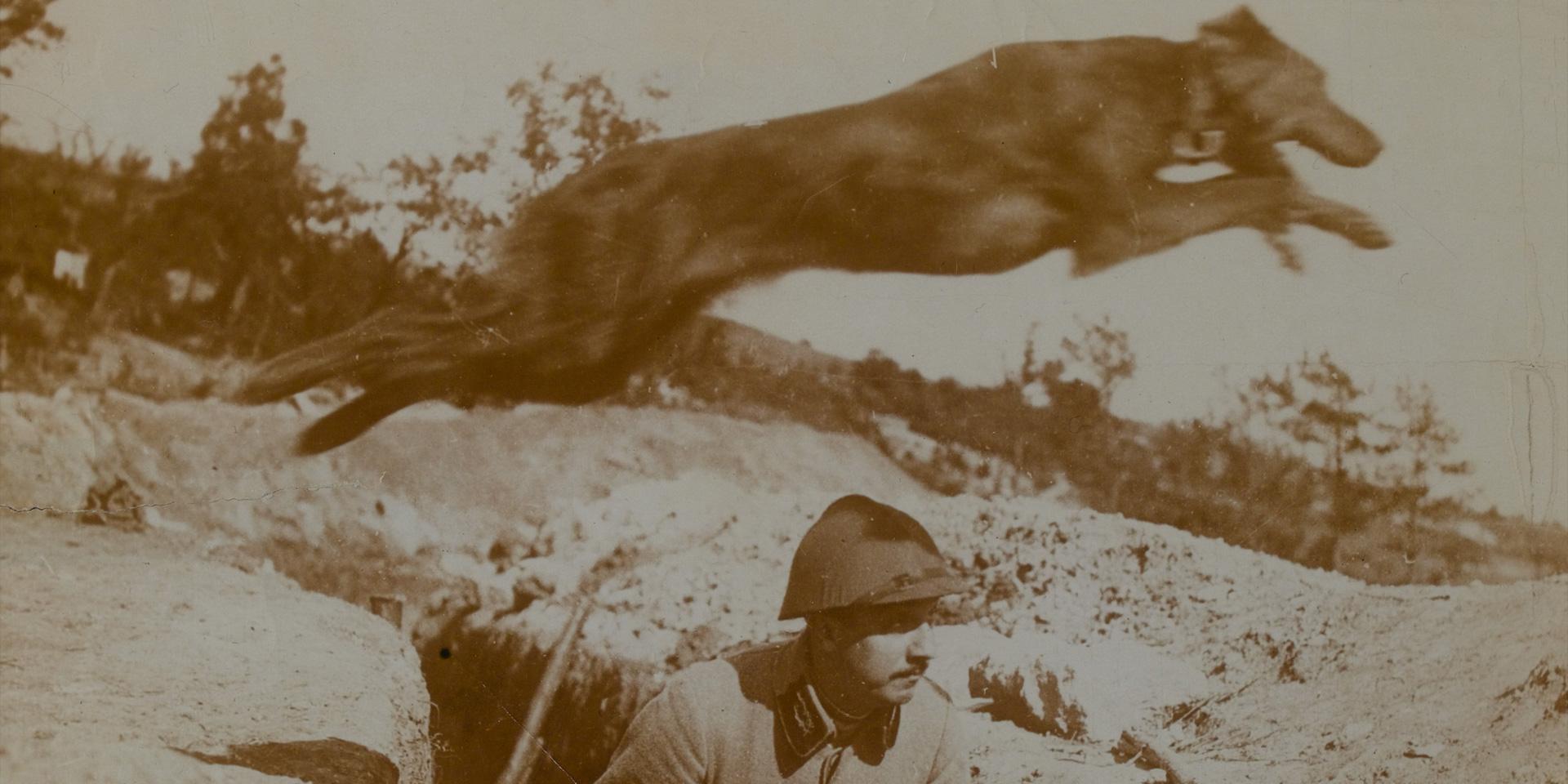 First World War animal crafts