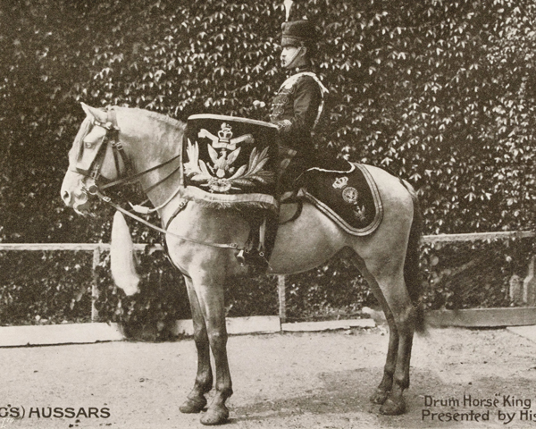 Drum Horse of the 14th (King's) Hussars, c1912