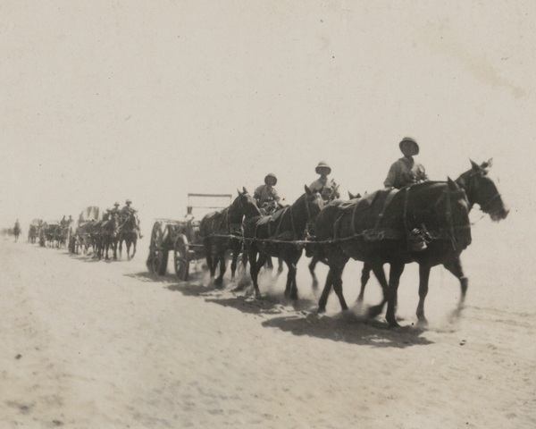 Horses pulling supplies across the desert in Palestine, 1917