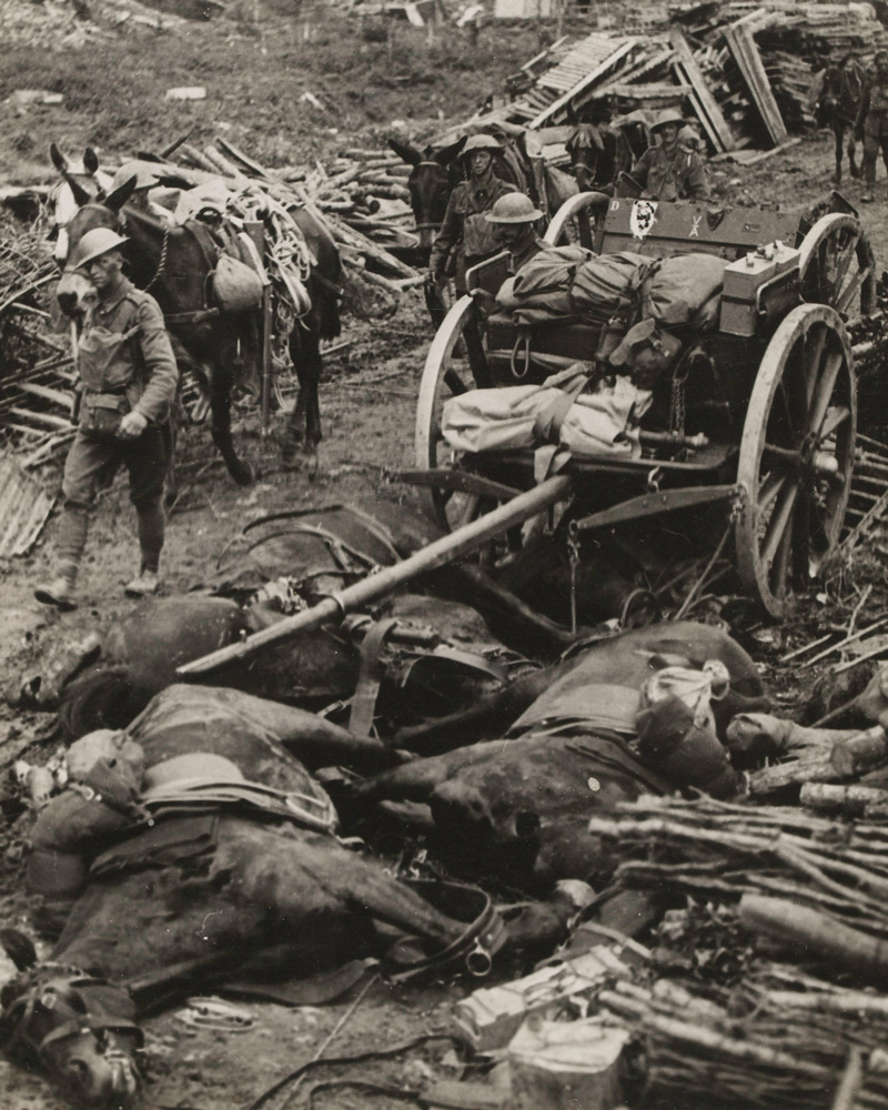 Dead horses, c1916