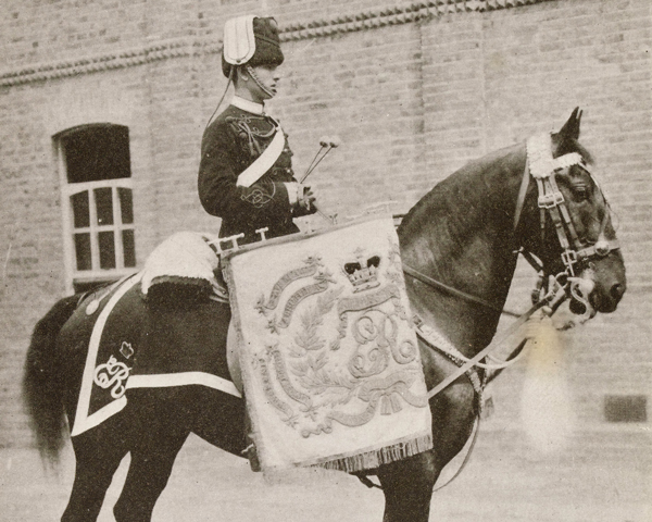 Drum horse of the 13th Hussars, c1912