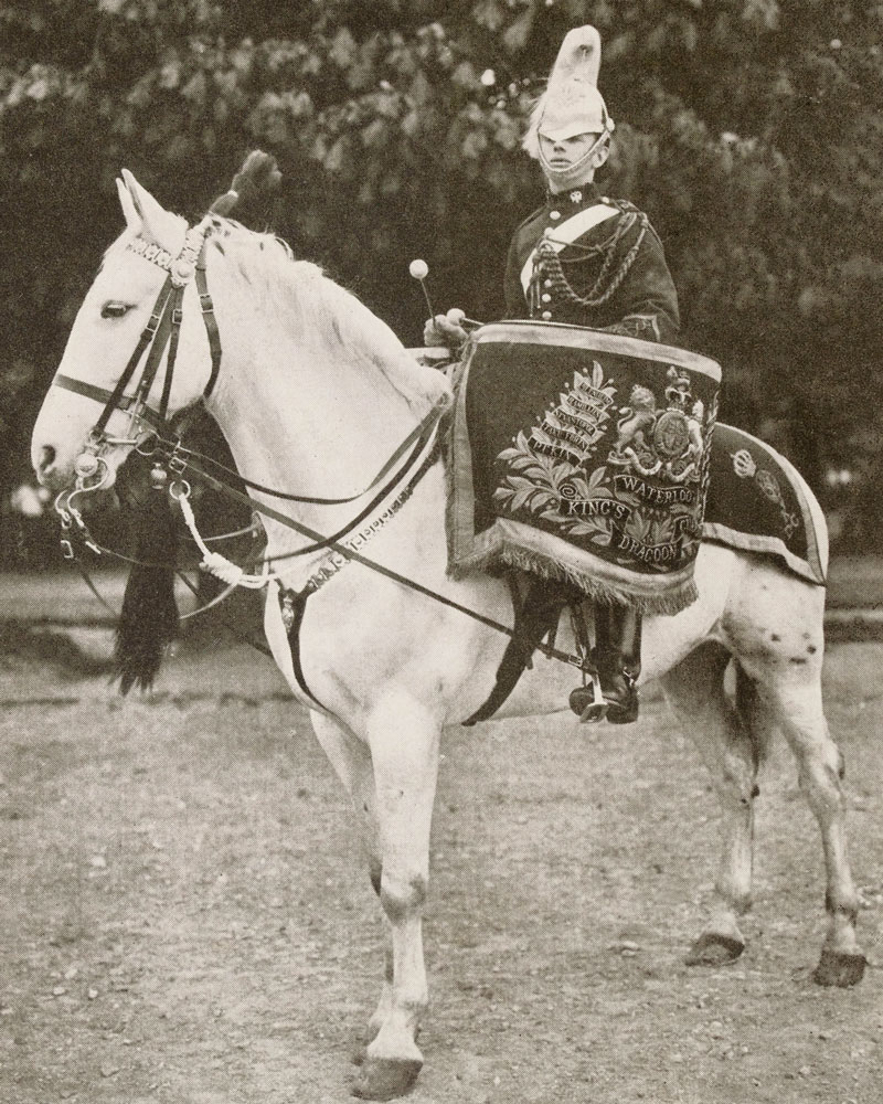 Drum horse of the 1st (King's) Dragoon Guards, c1912