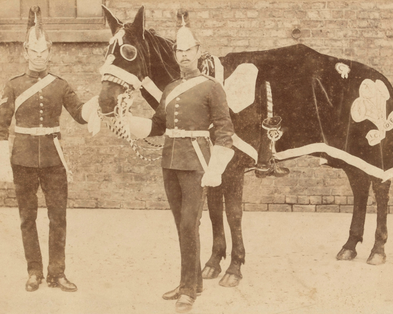 Horse of 3rd (Prince of Wales's) Dragoon Guards prepared for the funeral of the Duke of Clarence, 1892