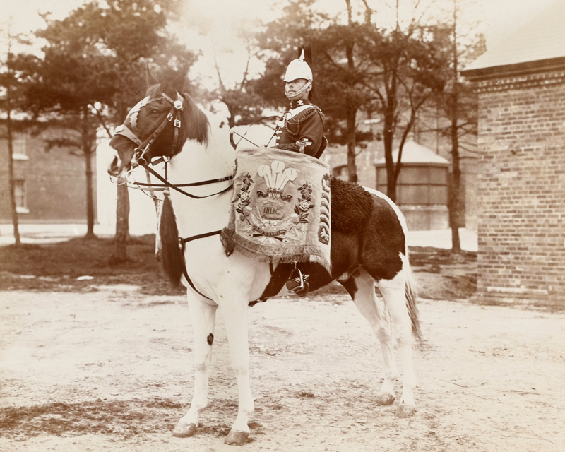 Drum horse, 3rd Prince of Wales's Dragoon Guards, c1895