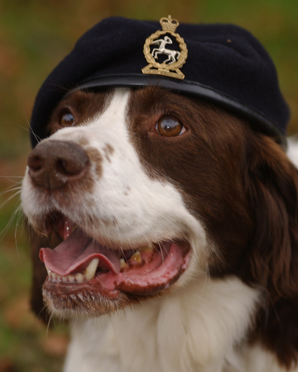 'Buster', an arms and explosive search dog, warded the Dickin Medal for gallantry, 2003