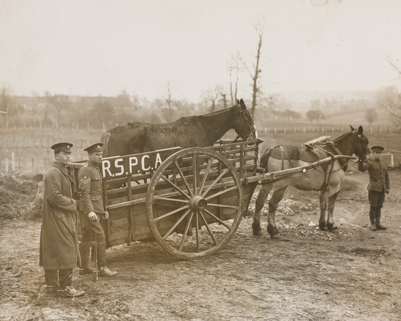 A horse float presented to Army Veterinary Corps by the RSPCA, c1915