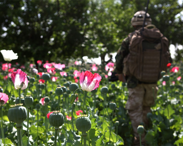 A soldier patrols in an Afghan opium poppy field, 2011