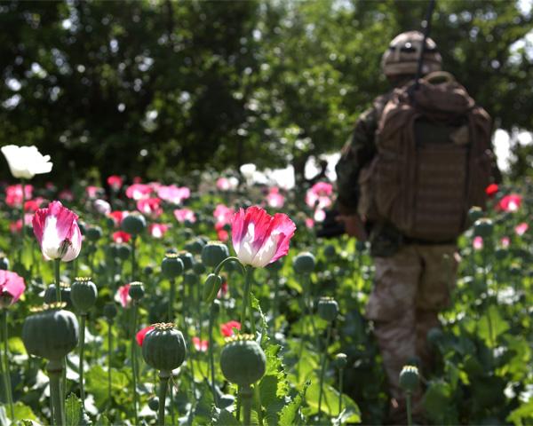 A soldier patrols in an Afghan opium poppy field, 2011