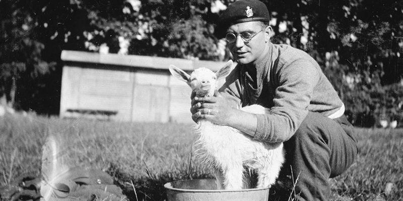 Soldier in a field bathing a baby goat, c1940
