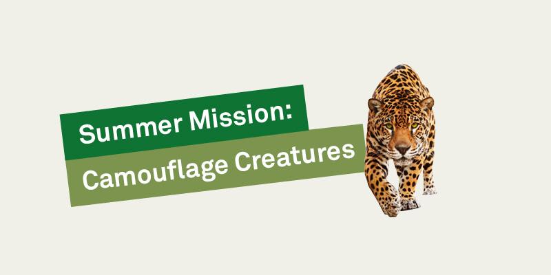 Camouflage creatures