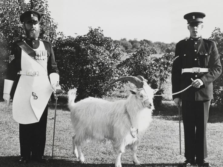 Goat mascot of the Royal Welsh Fusiliers, 1950s