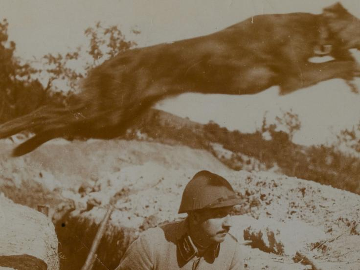 The British Messenger Dog Service in the First World War