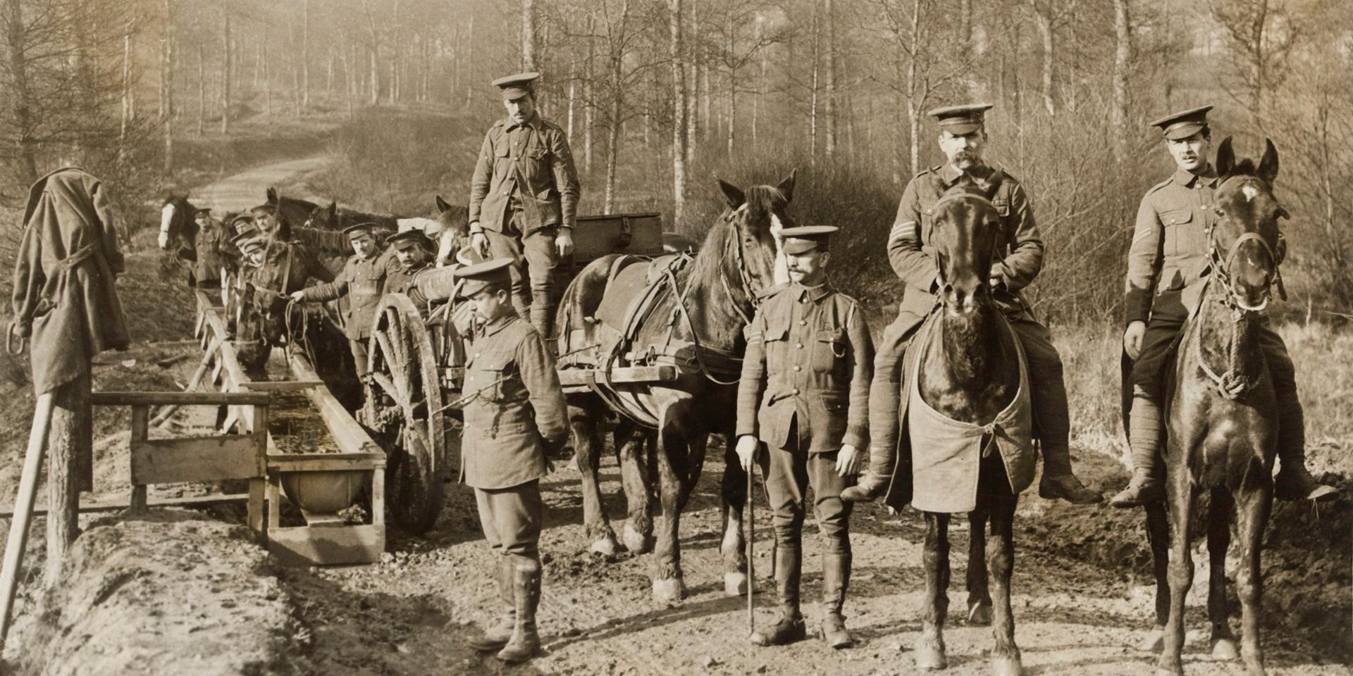 Army Service Corps supply convoy, Western Front, c1916
