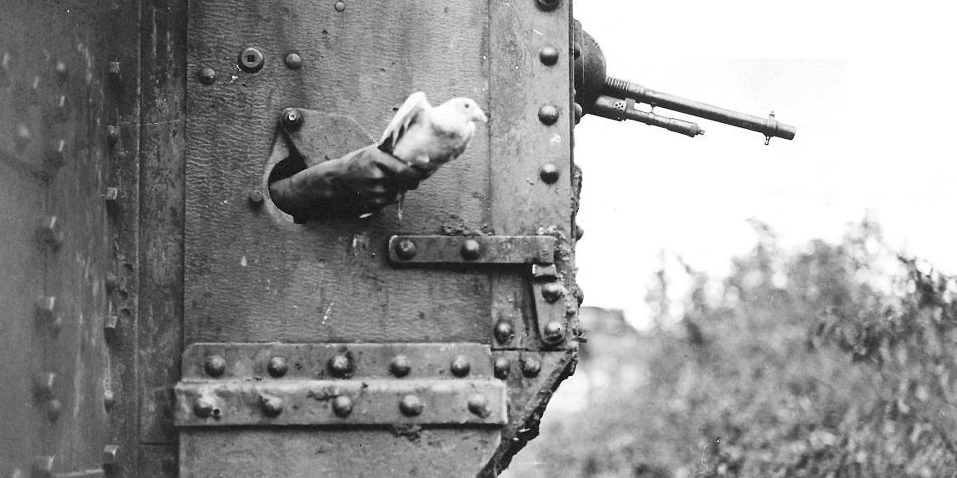 A messenger pigeon being released from the side of a British tank, 1918 © IWM (Q 9247)