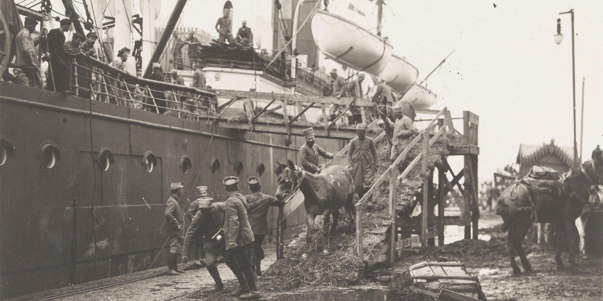 Landing horses in Salonika, c1916