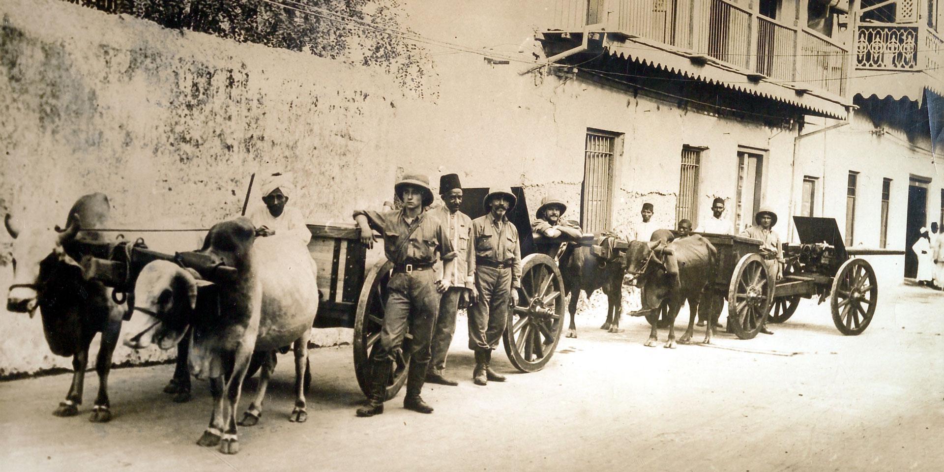 Oxen pulling British guns, 1914