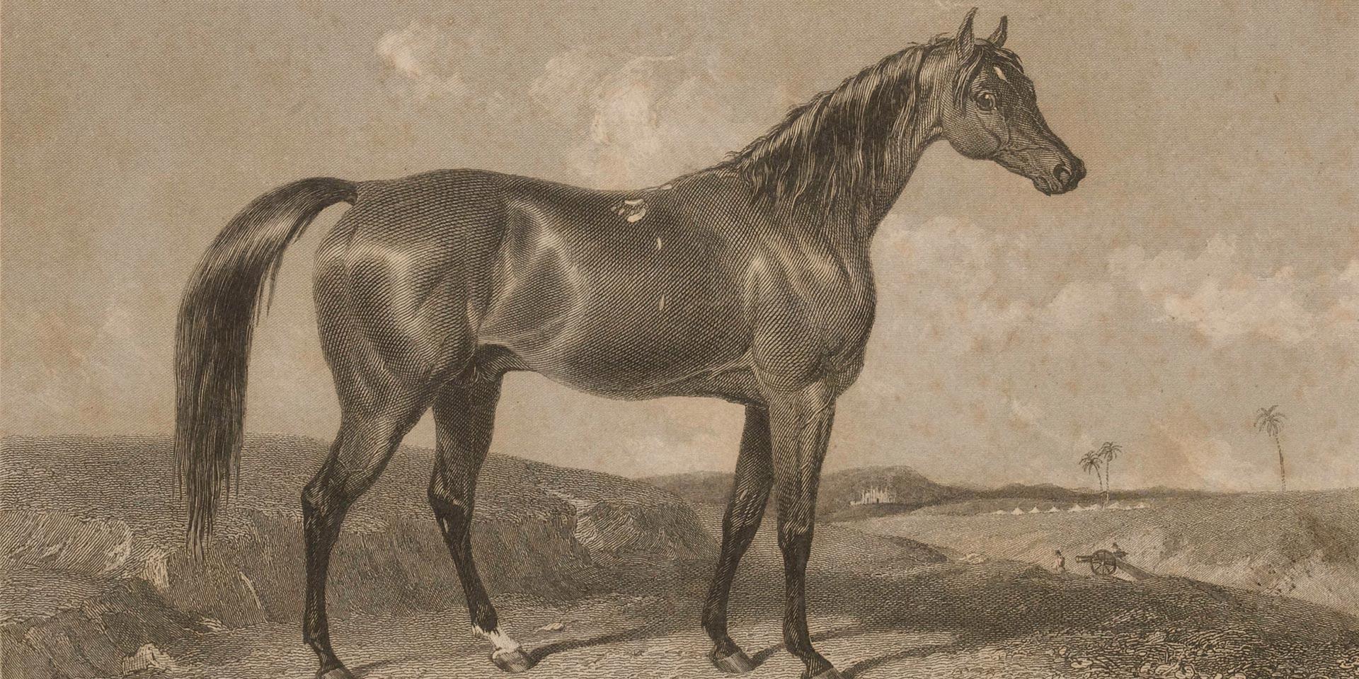 Aliwal in India, 1847