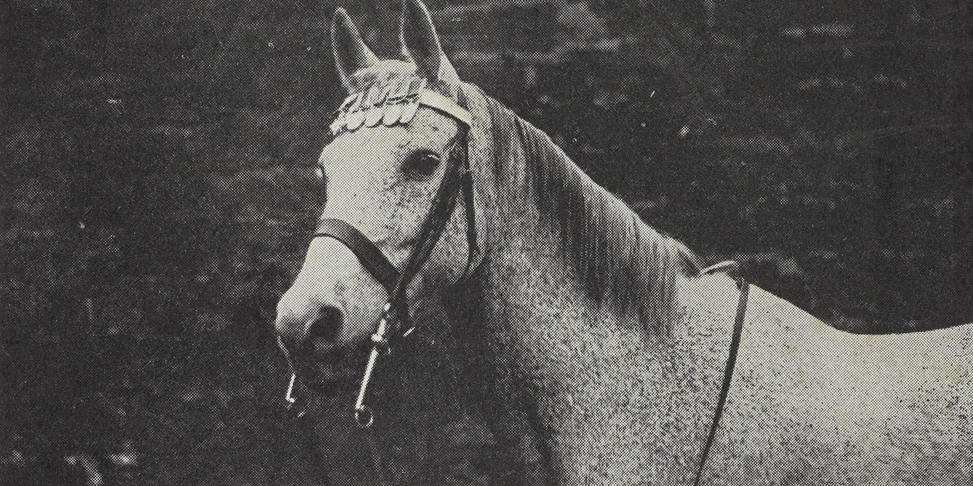 Ragtime aka 'Raggie' wearing his medals in 1931
