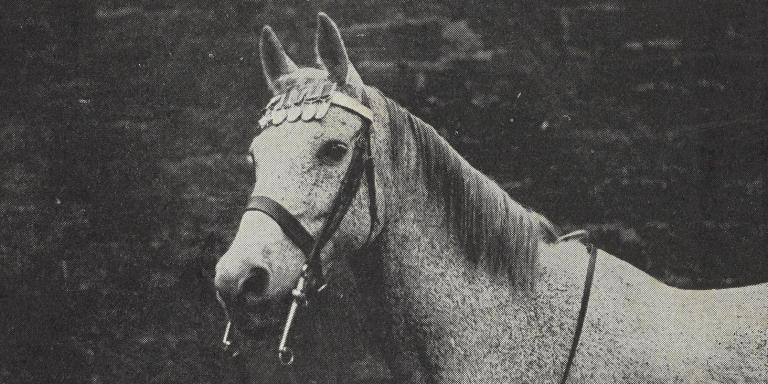 Ragtime aka 'Raggie' wearing his medals in 1931